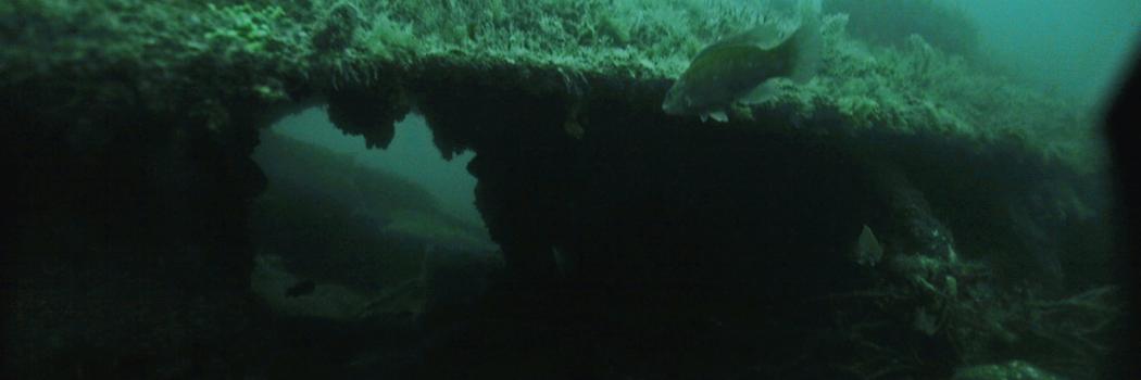 Wreck diving off Graves Light